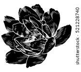 hand drawing peonies. vector... | Shutterstock .eps vector #521228740