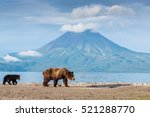 sunset at lake kuril. bears are ... | Shutterstock . vector #521288770
