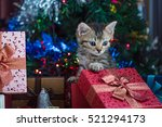 Stock photo close up of cute brown tabby persian kitten play and looking for gift in christmas day 521294173