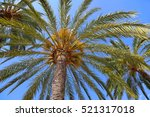 branches of beautiful palm... | Shutterstock . vector #521317018