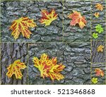 Collage Detailed View Of Autum...