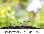 growing sprout | Shutterstock . vector #521352148
