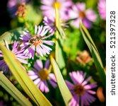 bee on flower background. honey ...   Shutterstock . vector #521397328