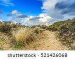 Dune Landscape Along The Dutc...