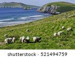 View Of Sheep Grazing Along Th...