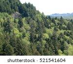 Conifer Forests On Coastal...