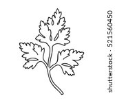 parsley icon in outline style... | Shutterstock .eps vector #521560450