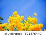 Yellow Flowers  On Sky...