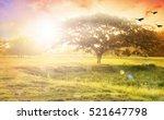 nature background concept ... | Shutterstock . vector #521647798