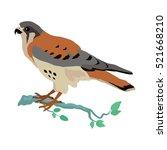 american kestrel vector.... | Shutterstock .eps vector #521668210