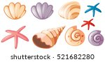 Different Types Of Seashells...