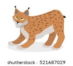 lynx  bobcat  wildcat isolated... | Shutterstock .eps vector #521687029