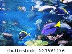 Underwater Scene With Beautifu...