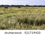 close up of tufts of grass in a ... | Shutterstock . vector #521719420