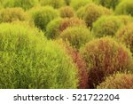 close up of red and green... | Shutterstock . vector #521722204
