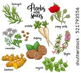 spices and herbs vector set to... | Shutterstock .eps vector #521793556
