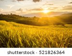 soft focus of rice farm... | Shutterstock . vector #521826364