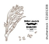 millet sketch. hand drawn... | Shutterstock .eps vector #521831308