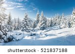majestic white spruces glowing... | Shutterstock . vector #521837188