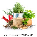 fresh green herbs with garden...