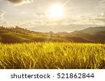 soft focus of rice farm... | Shutterstock . vector #521862844