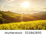 soft focus of rice farm... | Shutterstock . vector #521862850