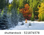 Stock photo autumn forest under first snow on polonyna lakers on the background of wild mountains above the 521876578