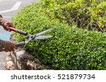 Professional Gardener Pruning...
