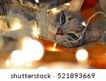 striped cat lying in the chain. ...   Shutterstock . vector #521893669