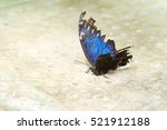 Tropical Butterfly Morpho...
