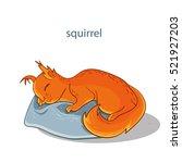 cute sleeping squirrel. sweet... | Shutterstock .eps vector #521927203