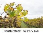 wine farm vineyard   Shutterstock . vector #521977168
