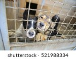 Abandoned Dogs In The Kennel...