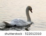 the swan | Shutterstock . vector #522012310