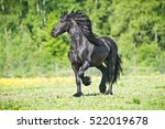 Black Friesian Horse Runs...