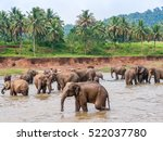 Group Elephants Watering...