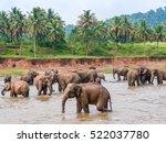 Group Elephants Watering...