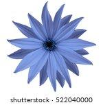 garden blue flower  white... | Shutterstock . vector #522040000