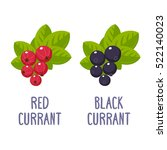 red and black currant. vector... | Shutterstock .eps vector #522140023