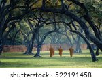 asian monk walk under a tree... | Shutterstock . vector #522191458