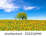 Sunflower Field With Trees