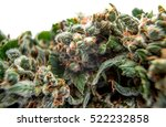 cannabis bud background ... | Shutterstock . vector #522232858