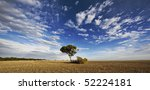 Single Tree In Field With...