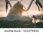 Closeup Of A Pomeranian Dog ...