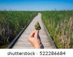 Hand Holding Cannabis Bud...