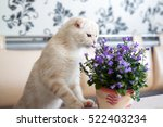 Beige Kitten Sniffing Campanul...