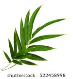 bamboo leaves isolated on white ... | Shutterstock . vector #522458998