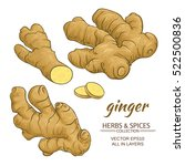 ginger roots vector set on... | Shutterstock .eps vector #522500836