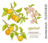 Apricot Branches Vector Set On...