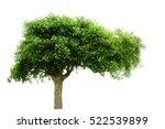 tree on white background | Shutterstock . vector #522539899